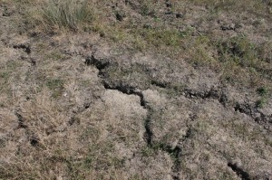 Cracked-Earth-because-of-Drought_Field-with-Grass__public domain IMG_1491-1024x682