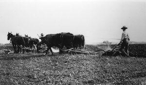 breaking-prairie-sod-3536