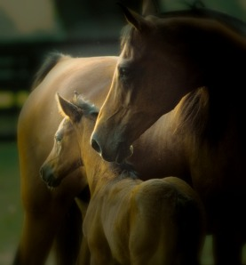 horse and foal, cropped for blog