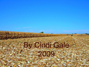 cornfield edited for blog Reap by Cindi Gale