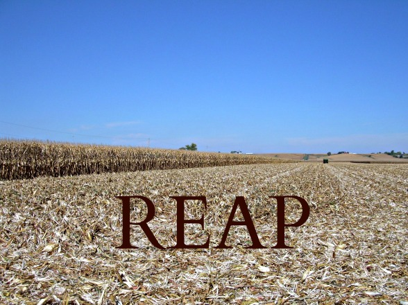 Reap photo for blog