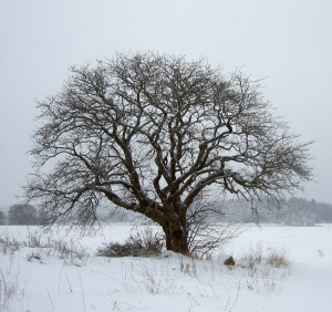 tree in winter for blog pg