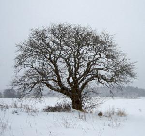 tree in winter for blog pg