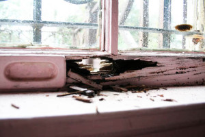 Kuppersmith window-rot-small