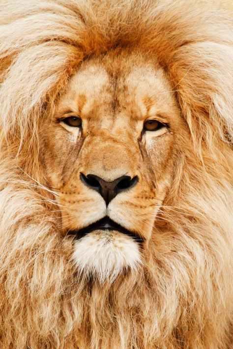 yellow animal eyes fur