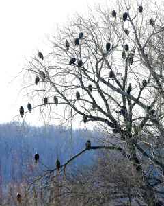 eagles in trees for blog