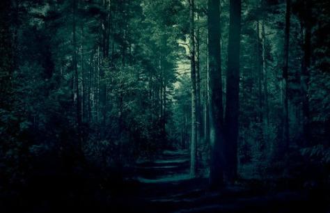 dark forest for blog